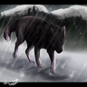 the Anubians wolf pack images wolves running in the night