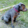 herbdog